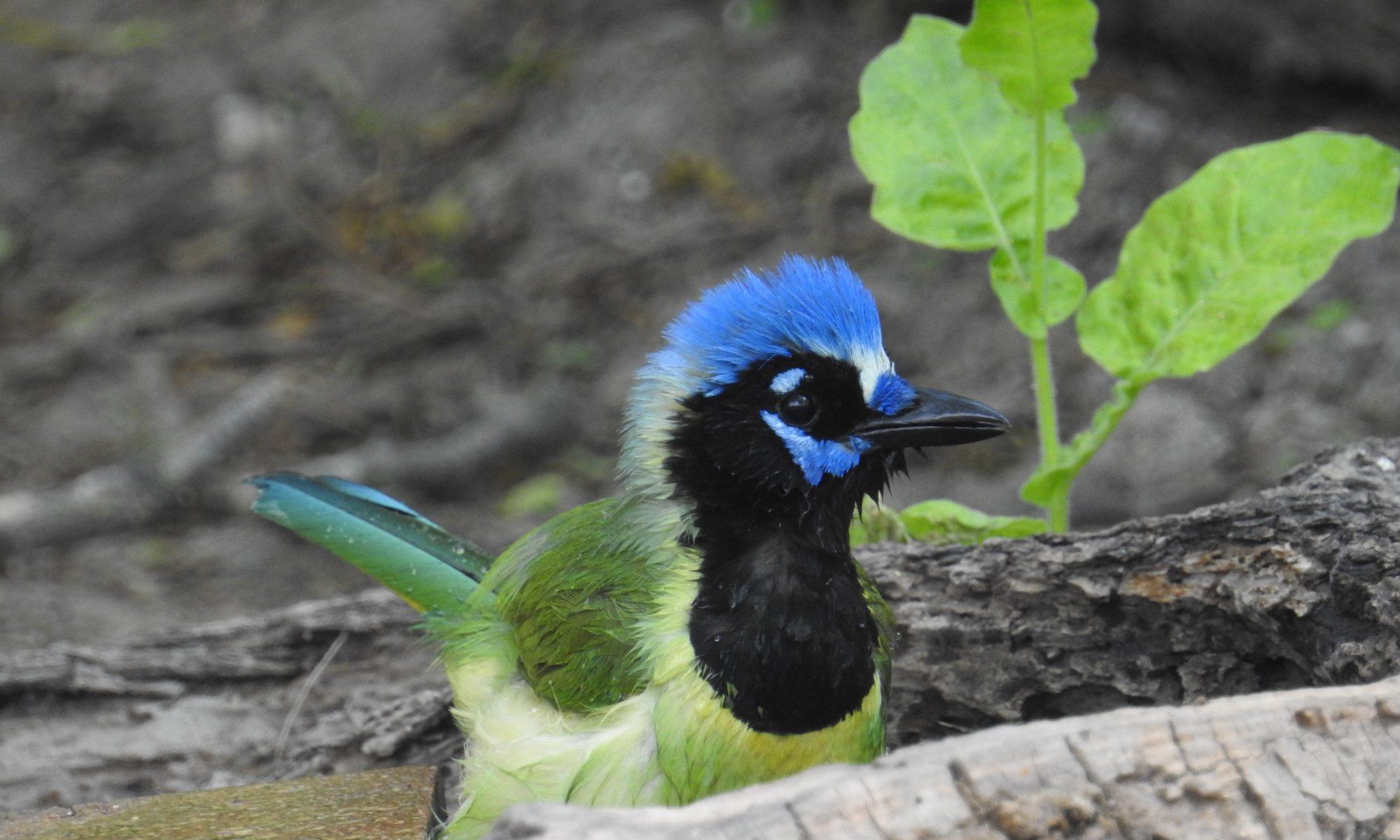 Canadian Birder