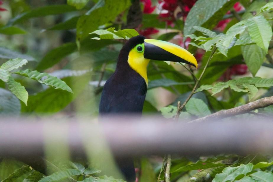 Ecuador Part 1. –Mindo